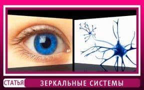 Нейрофизиология мозга человека. Зеркальные системы мозга.