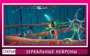 Зеркальные нейроны мозга. Как повлияли на эволюцию?